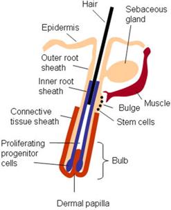 Детальный анализ причин выпадения волос