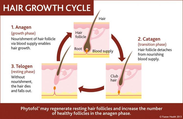 دورة حياة الشعر
