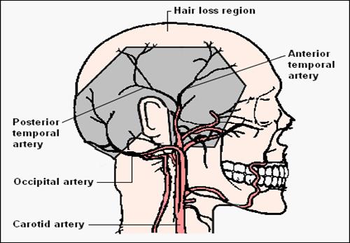 الدورة الدموية في منطقة التاج